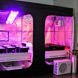 Cabinet Grow - 25% Off 8x4 Tent Package & Cabinet Grow - 25% Off 8x4 Tent Package | CannabisCouponCodes.com ...